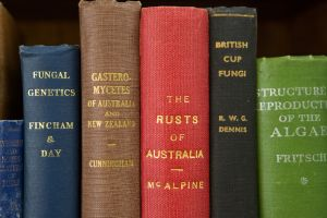 Photograph of library books at Creswick Campus library for Zoom background