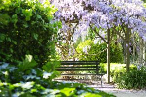 Photograph of a bench surrounded by green and florar trees at the Burnley Campus for Zoom background